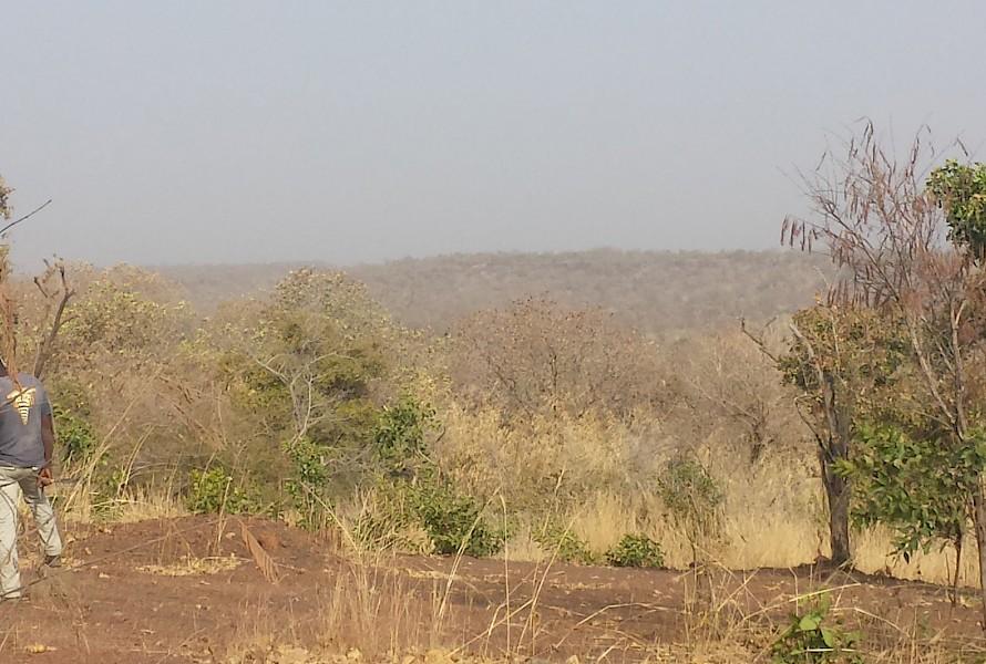 Altus Mali